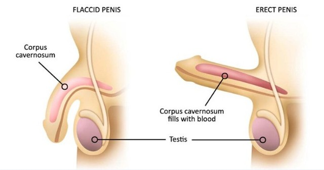 Viasil apžvalga ir rezultatai »Galiausiai rasti tinkamą Penis Pills